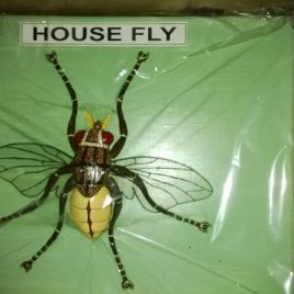Fly (House)