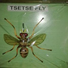 Fly (Tsetse)