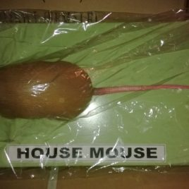 Mouse (House)